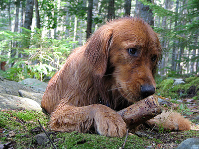 camping-with-dogs.jpg